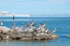 Pelícanos y muelle de la pesca Foto de archivo libre de regalías
