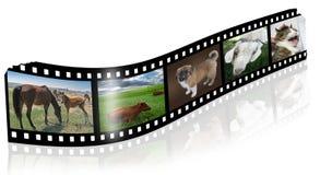 Película   Imagenes de archivo