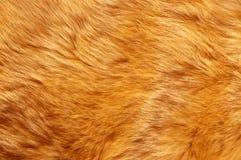 Pelage texture Stock Photo