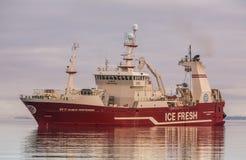 Pelagisk fiskeskyttel Royaltyfria Foton