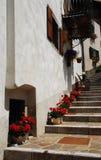 Pelargonien auf getretener Straße Lizenzfreies Stockbild