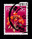 Pelargonium inquinans, Definitives Flora and Fauna serie, circa 1974. MOSCOW, RUSSIA - OCTOBER 1, 2017: A stamp printed in South Africa shows Pelargonium Stock Photo