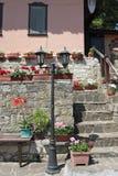 Pelargoniums Stock Photos