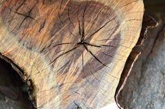 Pelatura corteccia e degli anelli interni Fotografia Stock Libera da Diritti