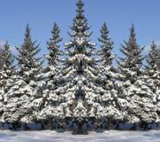Pele-árvores de ano novo Fotografia de Stock Royalty Free