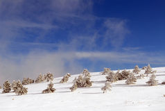 Pele-árvores sob a neve Foto de Stock Royalty Free