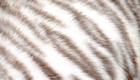 Pele animal do tigre Imagem de Stock Royalty Free