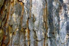 Pele da árvore Fotos de Stock Royalty Free