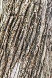 Pele da árvore em Suíça Fotografia de Stock