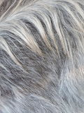Pele da cabra Fotos de Stock