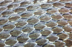 Pele da Grama-serpente, réptil, macro imagem de stock royalty free