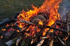 Pele da ram no incêndio Fotos de Stock Royalty Free