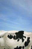 Pele da vaca imagens de stock