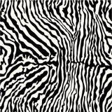 Pele da zebra Imagens de Stock Royalty Free