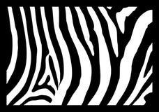 Pele da zebra ilustração stock
