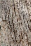 Pele das árvores Foto de Stock