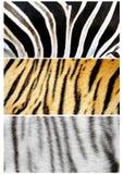Pele de animais imagens de stock royalty free