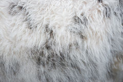 Pele de carneiro natural Fotos de Stock Royalty Free