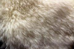 A pele de carneiro natural Fotos de Stock