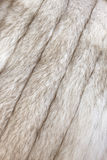 Pele de raposa ártica Imagem de Stock Royalty Free
