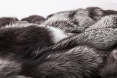 Pele de raposa de prata Imagens de Stock
