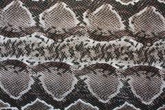 Pele de serpente Fotos de Stock Royalty Free