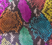Pele de serpente Fotografia de Stock