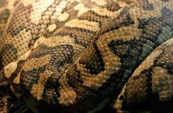 Pele de serpente Imagem de Stock Royalty Free