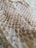 Pele de serpente geométrica Imagens de Stock