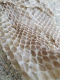 Pele de serpente geométrica Fotografia de Stock