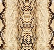 Pele de serpente, réptil Foto de Stock