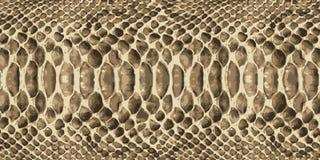 Pele de serpente Vetor Fotos de Stock Royalty Free