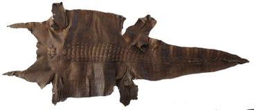 A pele de um crocodilo enorme da água salgada na parede filipinas Fotografia de Stock Royalty Free