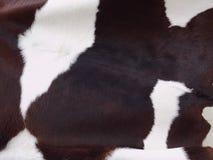 Pele de vaca de leiteria Fotografia de Stock Royalty Free