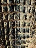 Pele do crocodilo Foto de Stock Royalty Free