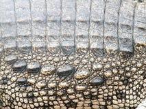 Pele do crocodilo Fotografia de Stock Royalty Free