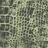 Pele do crocodilo Textura do vetor imprint ilustração do vetor