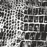 Pele do crocodilo Textura do vetor imprint ilustração stock