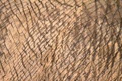 Pele do elefante fotos de stock