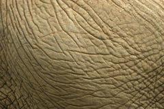 Pele do elefante Fotos de Stock Royalty Free