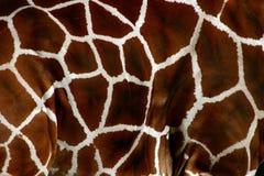 Pele do Giraffe Imagens de Stock