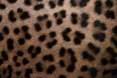 Pele do leopardo imagem de stock royalty free