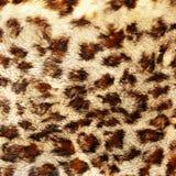 Pele do leopardo Fotos de Stock Royalty Free