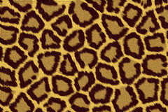 Pele do leopardo Foto de Stock