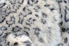 Pele do leopardo de neve fotos de stock