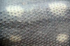 Pele do réptil Imagens de Stock