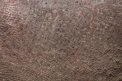 Pele do rinoceronte Imagens de Stock Royalty Free