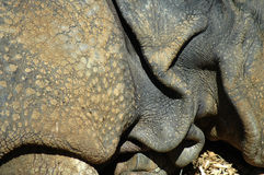 Pele do rinoceronte Fotos de Stock Royalty Free