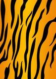 Pele do tigre Foto de Stock Royalty Free