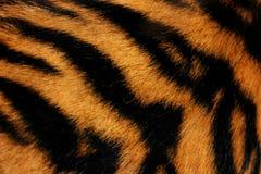 Pele do tigre Imagem de Stock Royalty Free